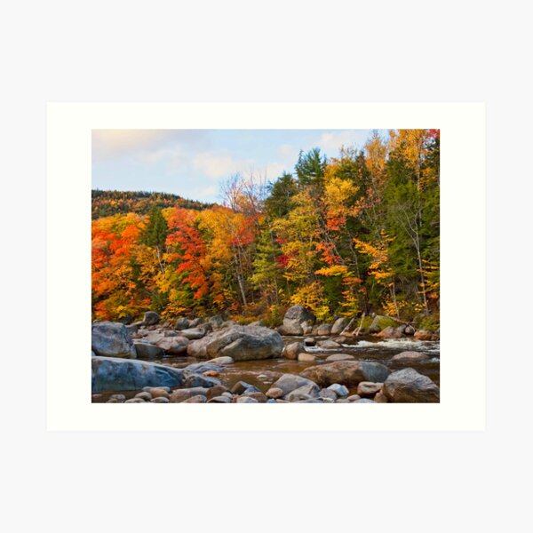 Swift River Foliage Art Print