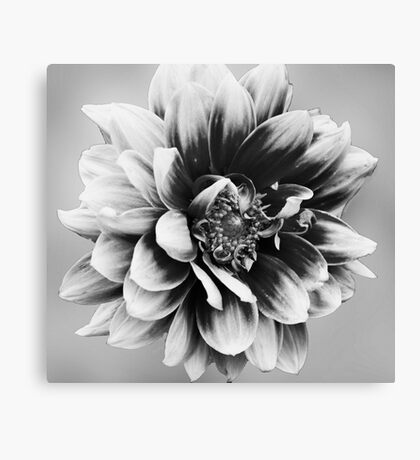 Who needs Colour Canvas Print