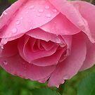 Raindrop Rose! by PatChristensen