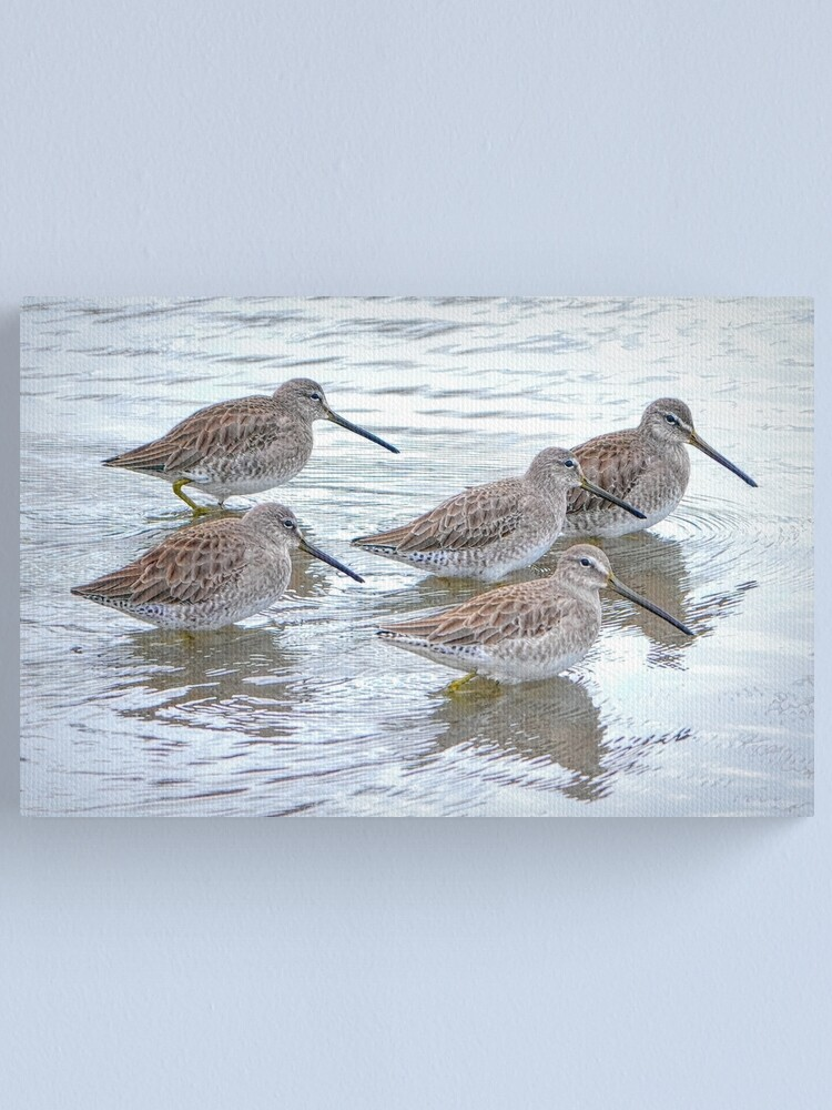 Alternate view of Long-billed Dowitchers Canvas Print