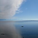 Seal bay park by Al Williscroft