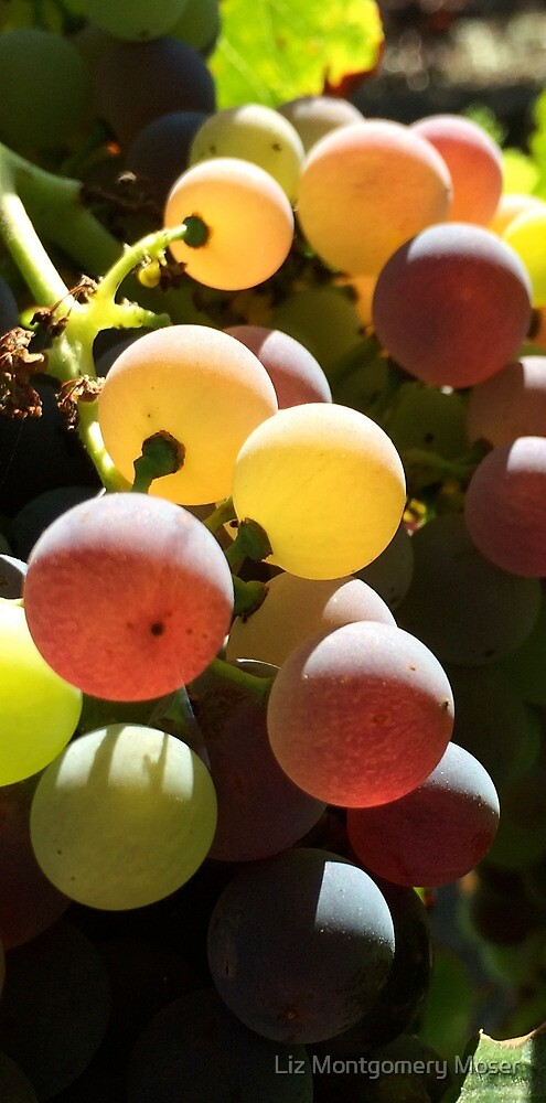 Grapes - Up Close and Personal by Liz Montgomery Moser