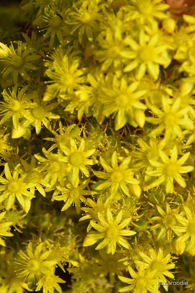 YELLOW FLOWERING CACTUS by kazaroodie