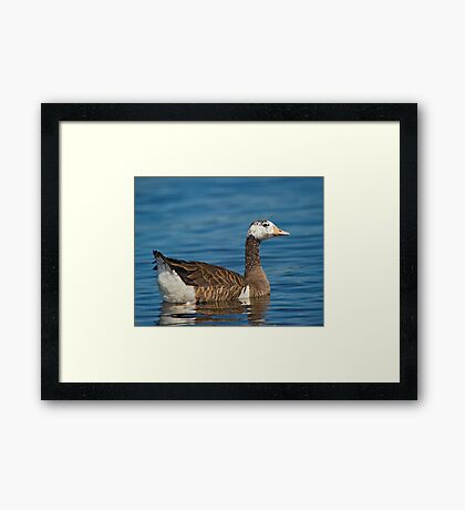 Not just another Goose Framed Print