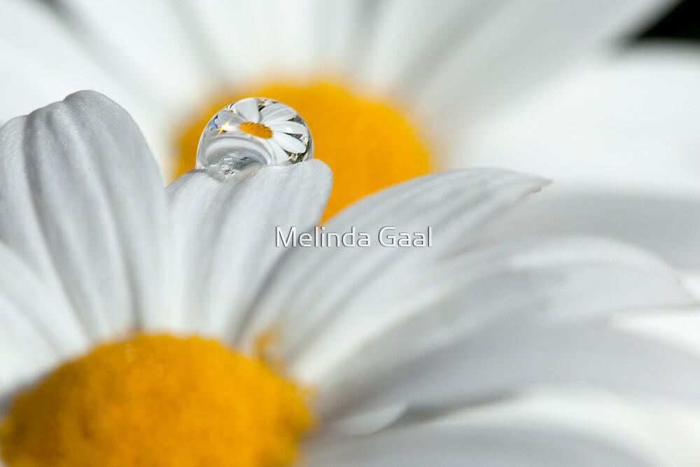 Summer raindrop by Melinda Gaal