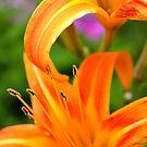 Tiger Lilies  by Allison  Flores