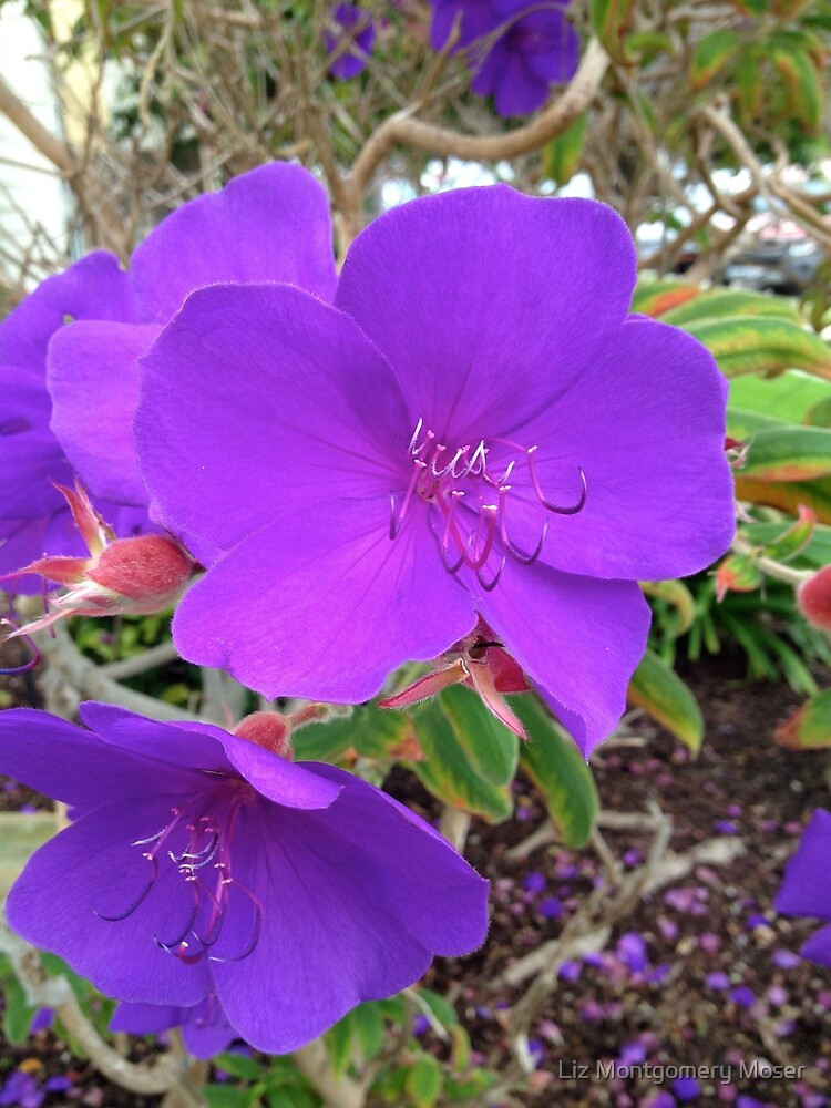 I Love Purple by Liz Montgomery Moser