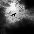 Silhouette of a hunter by larry flewers