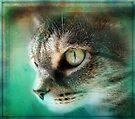 In My Dreams by jodi payne