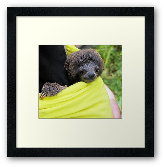 Three Toed Sloth by Leeanne Middleton