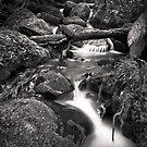 Cement Creek 2 by Christine Wilson