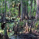Cypress Swamp by Judy Wanamaker