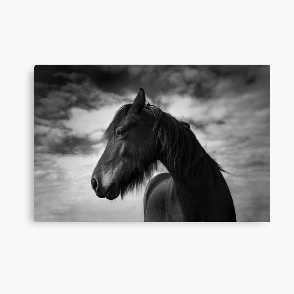 Wind Swept (Horse 1-5609/2) Canvas Print
