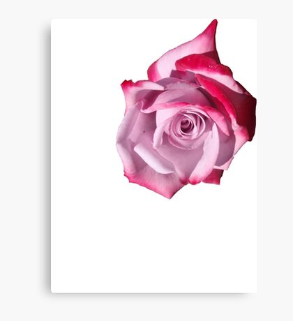 Rose of Pinks Canvas Print