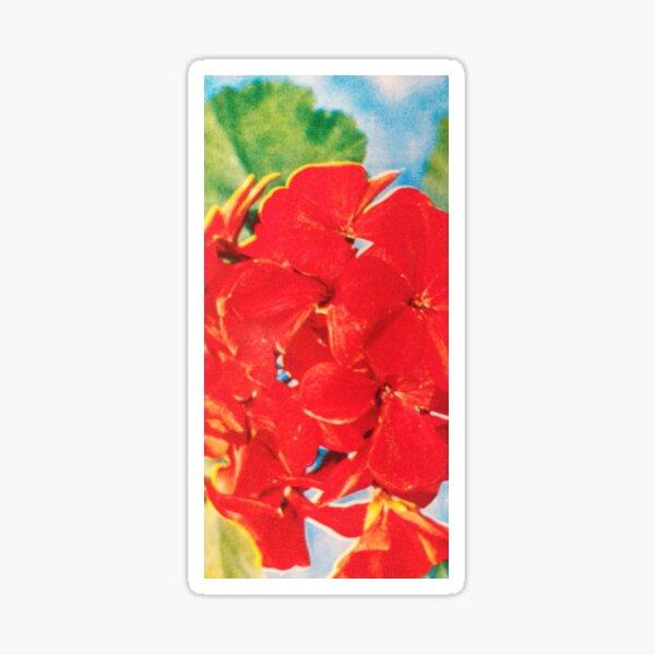 geranium hybride. Sticker