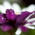 Raindrops by Melinda Gaal