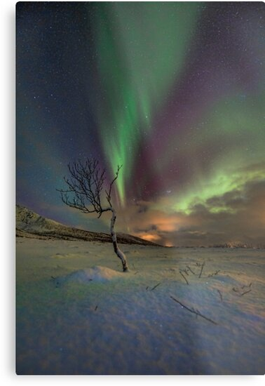 Lonely tree by Frank Olsen