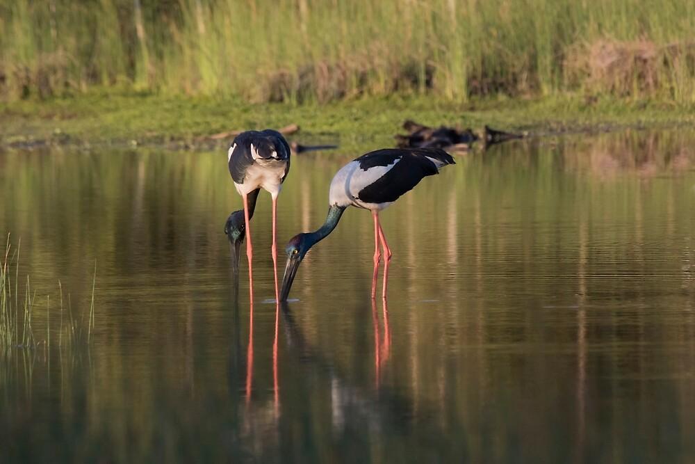 Peace On The Ponds by byronbackyard