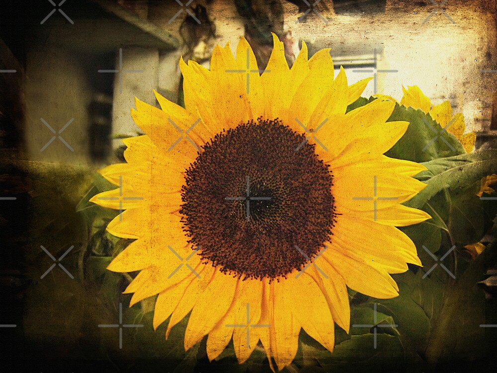 Sunflower by Maria  Gonzalez