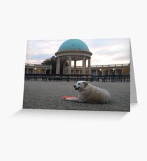 Crackers in The Park Greeting Card
