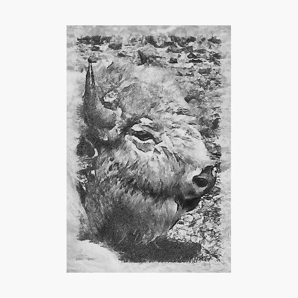 buffalo head Photographic Print