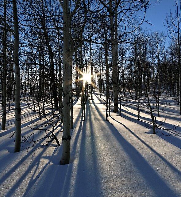 Wintery Lines by Robert Mullner