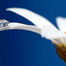 Baby blue flower fairy by Melinda Gaal