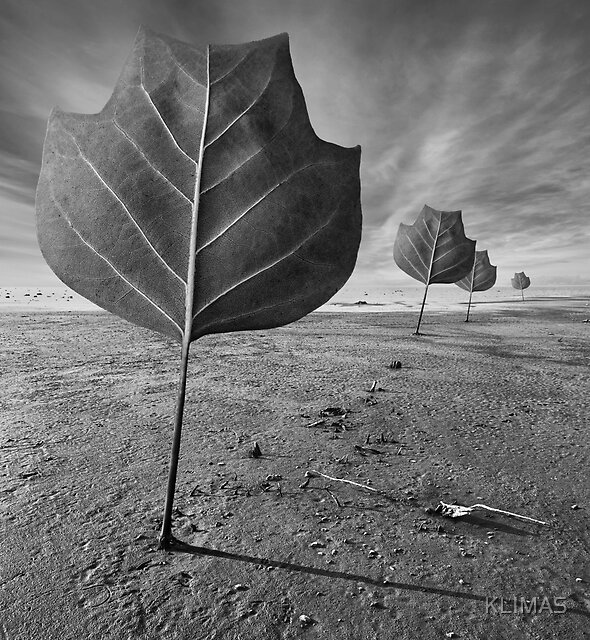 Plant Action by KLIMAS