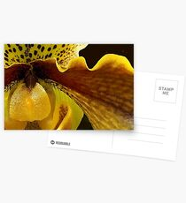 Orchid in Yellow Ochre Postcards