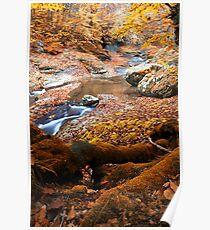 Golden autumn in mountain Poster