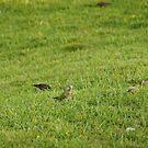 We are hungery birds 1 by kfurniz