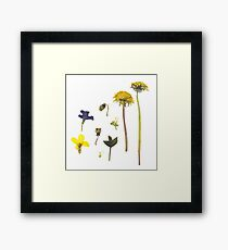 Pressed Flowers Framed Print