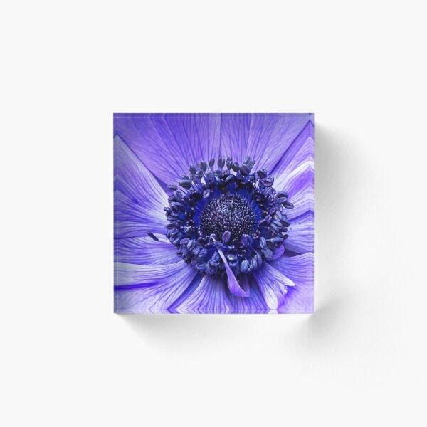 Blue Anemone Acrylic Block