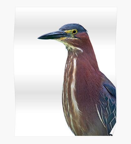 Heron Portrait Poster