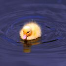 A little yellow ball of fluff  by larry flewers