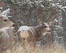 Storm deer by Christine Ford