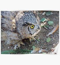 Big Momma Great Horned Owl Poster