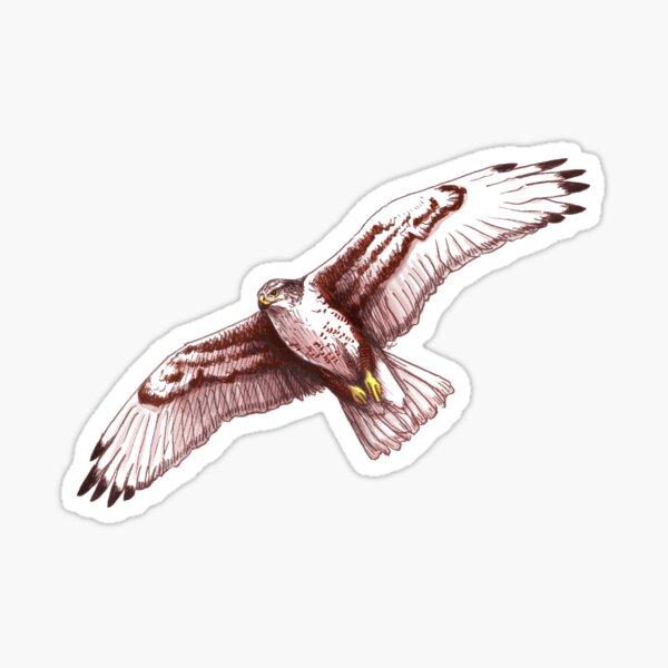 Ferruginous Hawk - Buteo regalis Sticker