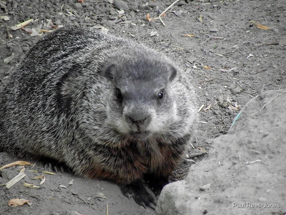 Groundhog day! by Paul Rees-Jones