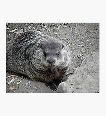 Groundhog day! Photographic Print