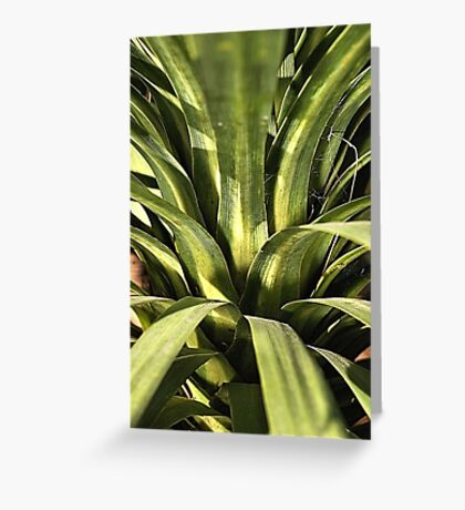 Palm Green Greeting Card