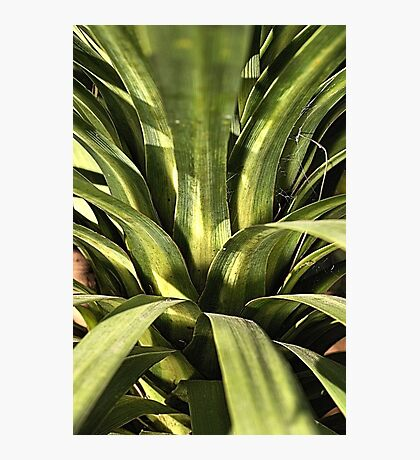 Palm Green Photographic Print