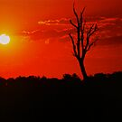 *The Sun Sets In Outback Australia* by Ronald Rockman