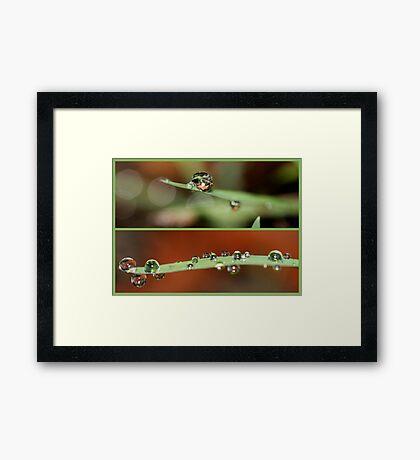 SOLITARES & CLUSTERS Framed Print