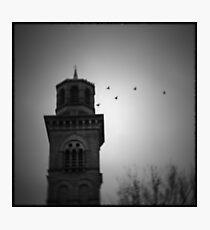 Salts Birds Photographic Print