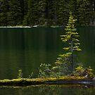 Little Island by Pam Hogg