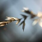 Grass seeding in the sun by yampy
