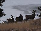 Three deer night by Christine Ford