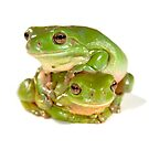 Green tree frogs, one on top of the other by clearviewstock