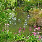 Pond, Flaxmere Garden, South Island, New Zealand.  by johnrf